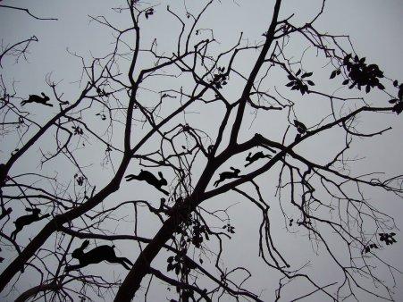 La plaga del brachichito, 2008 - Foto intervenida - Fotografía color - Medidas variables