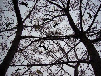 La plaga del paraíso, 2008 - Foto intervenida - Fotografía color - Medidas variables