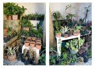 Wintergarden, 2007/2008 - Foto intervenida - Fotografía color - 2 piezas, medidas variables