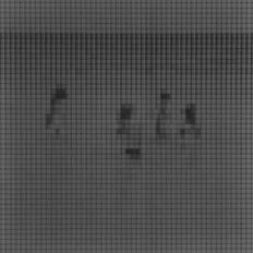 Sin título (Coaquaddus), 2015/2016 - Plata en gelatina - 25 x 25 cm