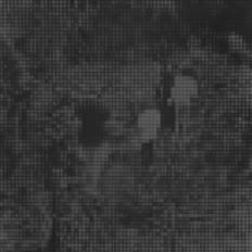 Sin título (Caminata con niños), 2015/2016 - Plata en gelatina - 25 x 25 cm
