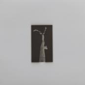 Sin título (Poda), 2015/2016 - Plata en gelatina - 25 x 25 cm