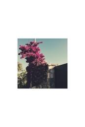 La doble vida IV (VII), 2017- Fotografía color -15 x 10 cm