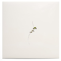 Sin título I, 2000 - Fotograma sobre Cibachrome - 14 x 14 cm - Pieza única