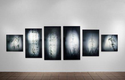 """Bignonia I, II y III; Singonio I, II y III, 1999 - Fotografía color - Medidas variables - """"Ojo al País"""", Centro Cultural Borges, Buenos Aires"""